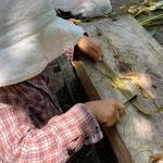 7月26日 すずきくにえ撮影 「カラムシ収穫4」 寺前谷戸