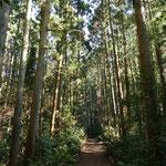 2016年1月9日撮影 平野隆一 「森戸林道にて」