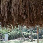 6月4日 伊藤理津子撮影 「麦の収穫1」 寺前谷戸