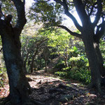 桐山 大 「仙元山から戸根山までの道程。Ⅱ」 2014.11.22撮影
