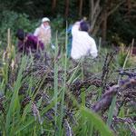 10月25日 すずきくにえ撮影 〜寺前谷戸にて〜 緑米の稲刈りでした。 寺前谷戸
