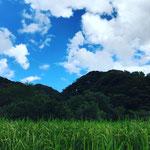 8月27日 小菅純撮影 「稲穂が垂れてきました。」 寺前谷戸