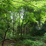 6月7日 小菅純 撮影 梅雨入り前の大沢谷 大沢谷