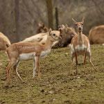 Tierpark Herberstein, Steiermark, Österreich März 2021