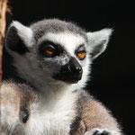 Weisser Zoo, Niederösterreich, Österreich Juni 2020