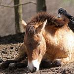 Tierpark Herberstein, Steiermark, Österreich April 2013