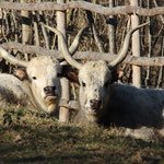 Tierpark Herberstein, Steiermark, Österreich Jänner 2020