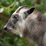 Calgary Zoo, Calgary, Alberta, Kanada September 2019