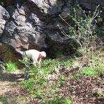 Weitere Pflegemaßnahmen am Wandfuß der Schafswand.