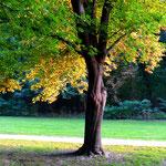 Ganze Bäume machen halbe halbe - halb Sommer, halb Herbst :)