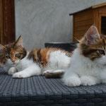 Aida & Adelia