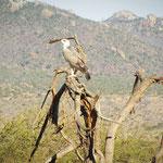 aquila-Tsavo-Est-safari-kenya-in2kenya