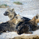 iene Amboseli