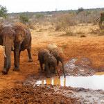 elefanti-Tsavo-Est-safari-kenya-in2kenya