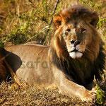 taita hill reserve leone - in2kenya