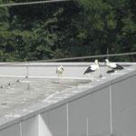 Die Jungen auf dem Dach................                           Foto: Robert Gattringer