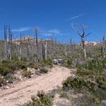 Waldbrandgebiet, Inselmitte Korsika
