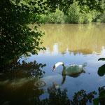 Les étangs des Tourbières à St-Pierre-es-Champs