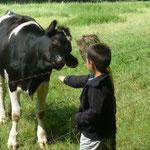Nos voisines les vaches