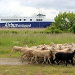 Devant l'appontement de l'Aibus A380 à Pauillac.