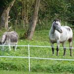 ane et chevaux de la propriété