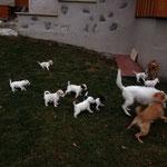 soviele Hunde hatten wir auch noch nicht im Garten