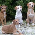 Nuria, Maya und Leo (hinten) mit ihrer Mama Kessy