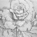 Rose, Bleistift