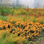 Blumenbeete