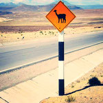 Vorsicht! Lamas überqueren den Highway