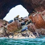 Seelöwen auf den Islas Ballestas, Paracas