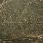 Scharrbilder in der Wüste von Nasca