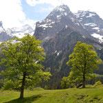 Bergfrühling im Rosenlauital