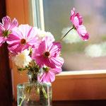 Blumen aus dem eigenen Garten.