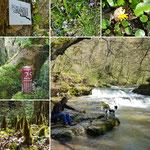 Impressionen vom Schlichemtal ( 2,5 Km von der Ferienwohnung entfernt)