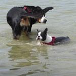 Hui, Diva steht noch....und Merlin tastet zum ersten Mal ans schwimmen.