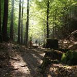 Weg durch den Uttewalder Grund
