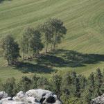 Drei Birken an den Papststeinen