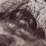 Hein Gorny (1904-1967) - Spinnwarze einer Kreuzspinne - 1934 - gelatin silver print vintage - 22 x 16,1 (22,5 x 16,6) cm - © Hein Gorny / Collection Regard
