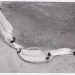 Siegfried Lauterwasser (1913 - 2000) - Seeufer (Lakeshore) - 1950 - Gelatin silver print, early print - 11,6 x 21,6 cm - © Siegfried Lauterwasser