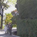 桂離宮を囲む桂垣