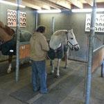 Schmiedeprüfung - Pferdbeurteilung