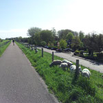 Der Deich zwischen Andijk und dem Ferienpark