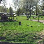 Mini-Zoo im Ferienpark