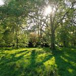 Hyde Park. So wunderbar groß und grün, man vergisst glatt, dass man in einer Metropole ist.