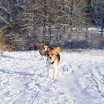Beaglerennen