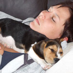 Beaglewelpe Dooley kuschelt