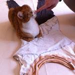 Katzi hilft mit