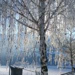 Wintereindruck