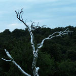arbre de vie, couverture de survie, photo M. Latte